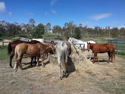 agriculture-farming-australia-10