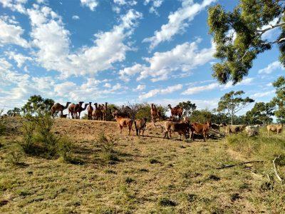 agriculture-farming-australia-3