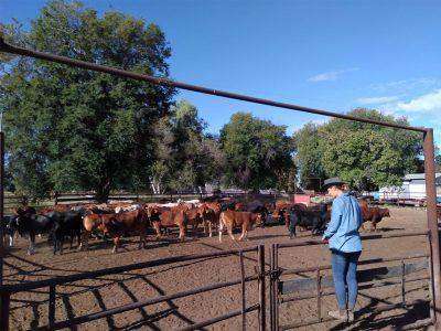 agriculture-farming-australia-5