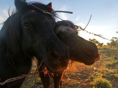 agriculture-farming-australia-7