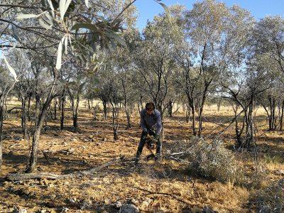 agriculture-farming-australia-8