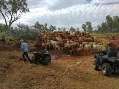 agriculture-farming-australia-9
