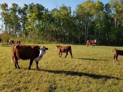 agriculture-farming-canada-6
