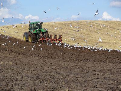 agriculture-farming-denmark-3